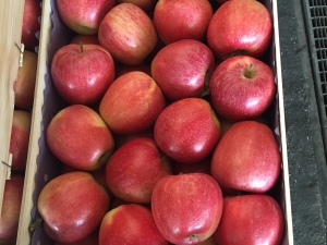Gala apples in 13Kg wooden box for Egypt