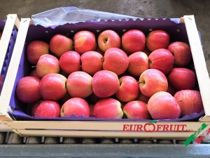 Gala apples in 9Kg wooden box for Libya